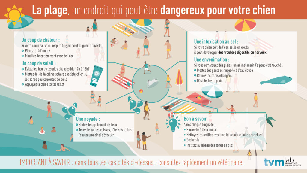 Infographie des dangers de la plage pour les chiens.