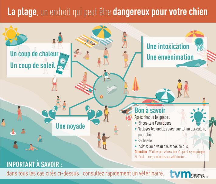 INFOGRAPHIE : Les dangers de la plage pour les chiens 1