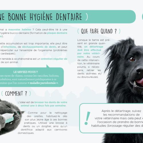 Dépliant-Hygiène-TVM-4