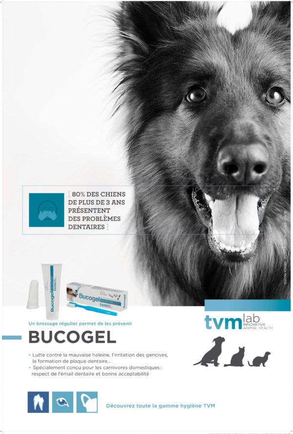Poster Hygiène des dents (à l'unité) 1