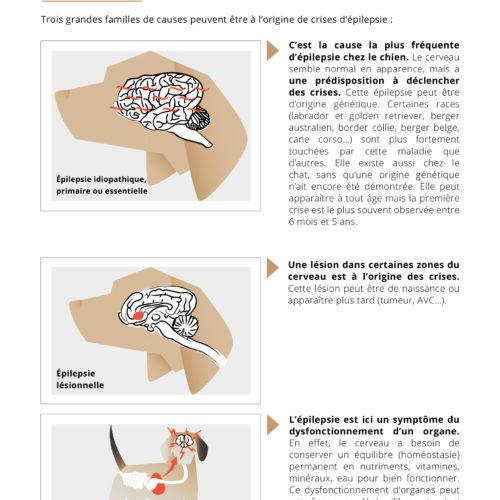 Remis de visite Comprendre l'épilepsie TVM-5