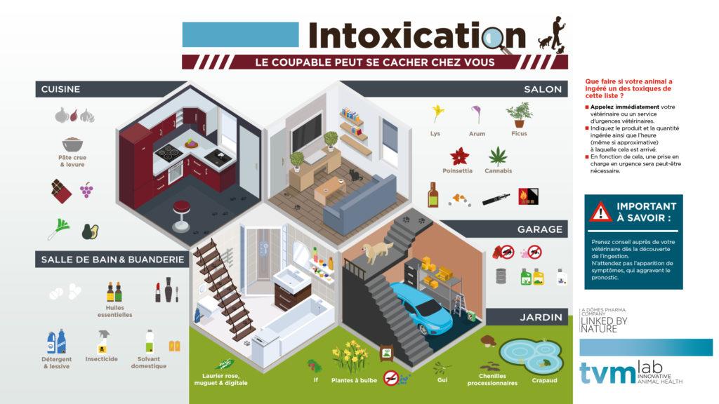 INFOGRAPHIE ET VISUELS ECRAN SALLE D'ATTENTE : Les principaux dangers d'intoxication de la maison et du jardin pour le chien et le chat 3