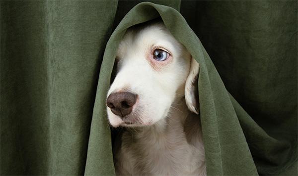 Documents vétérinaire à télécharger 2