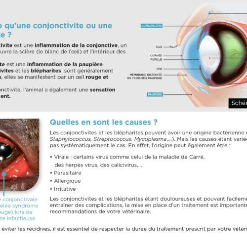leaflet-conjonctivite-blepharite-2