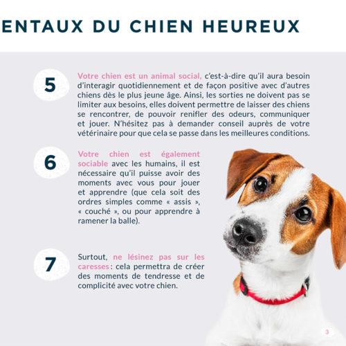 Leaflet-Alphazium-chien-20x20-180712-HD-pap-2-3