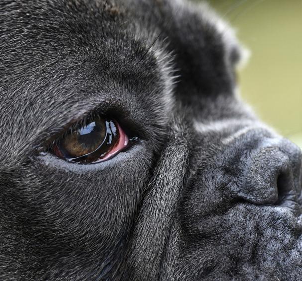 Mon chien a les yeux rouges 2
