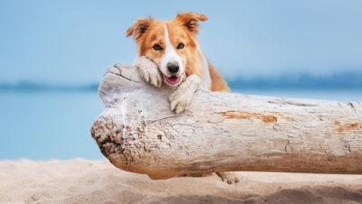 chien-plage