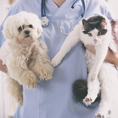 Documents vétérinaire à télécharger 1