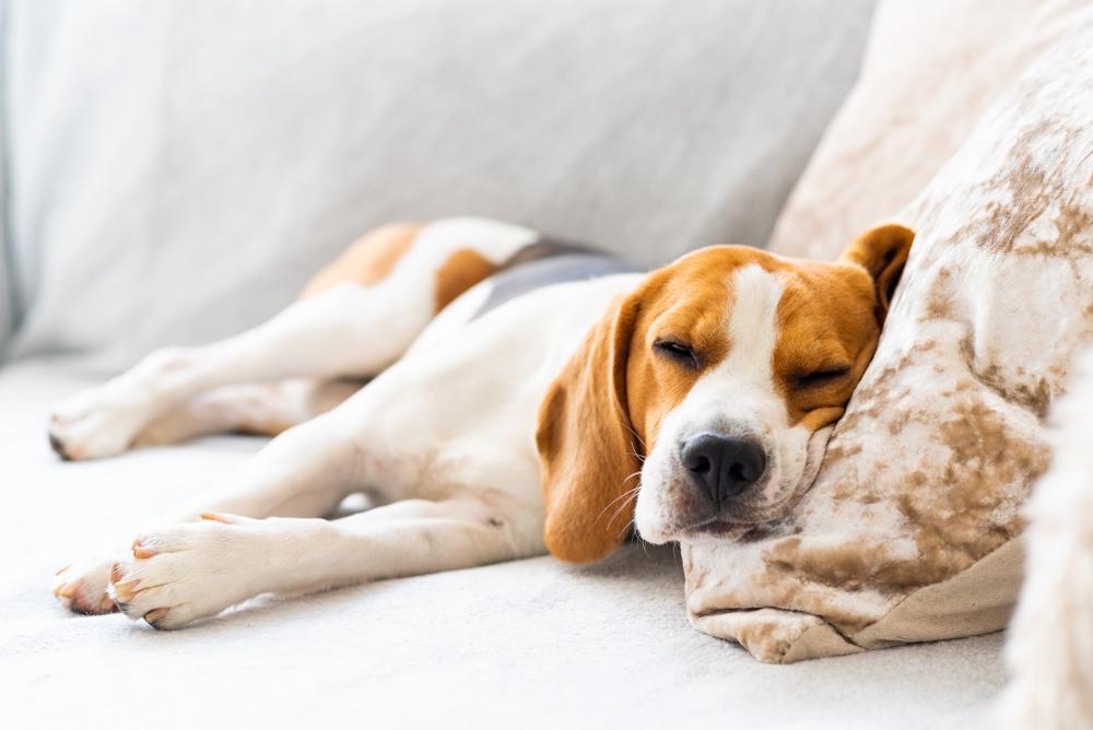 chien-troubles-sommeil