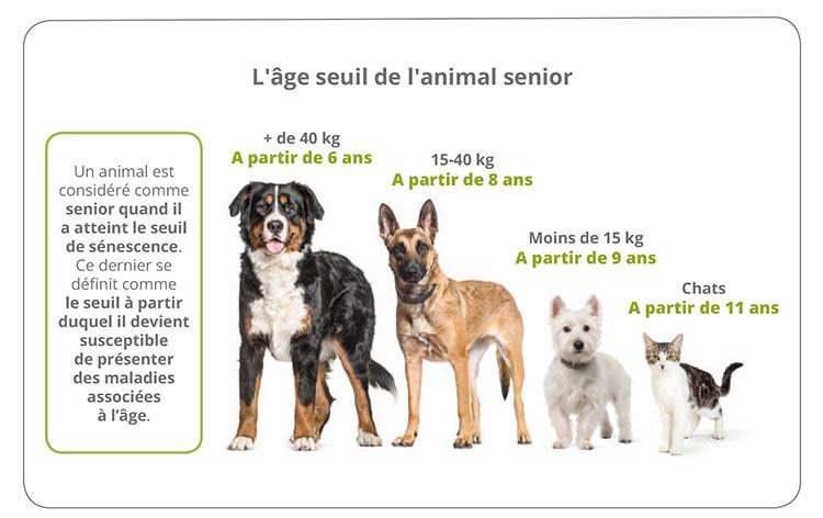 Le vieillissement cérébral accéléré chez le chien et le chat 1