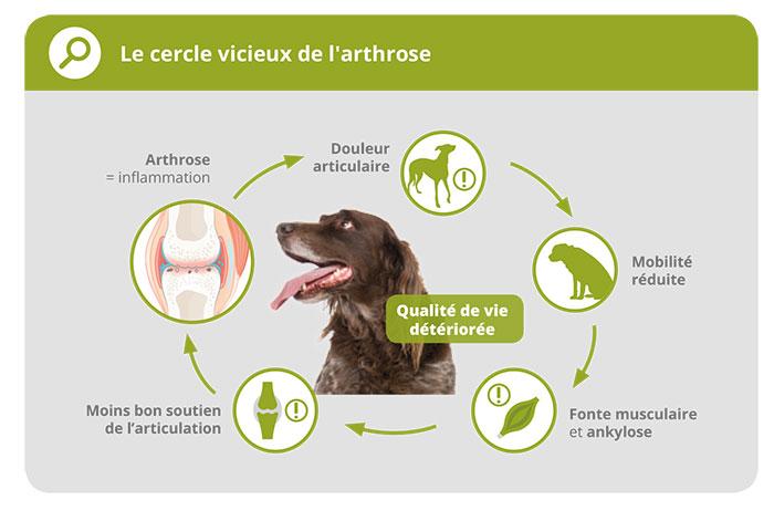 Les traitements de l'arthrose chez le chien et le chat 1