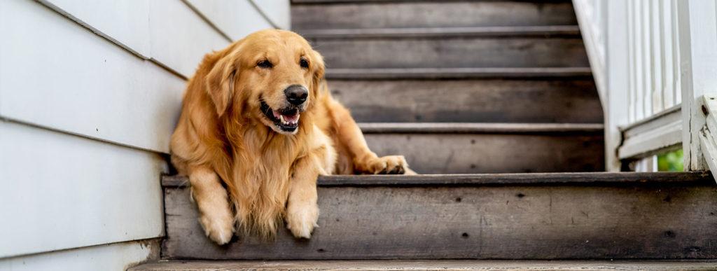 chien signes arthrose