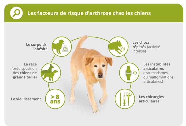 L'arthrose chez le chien 3