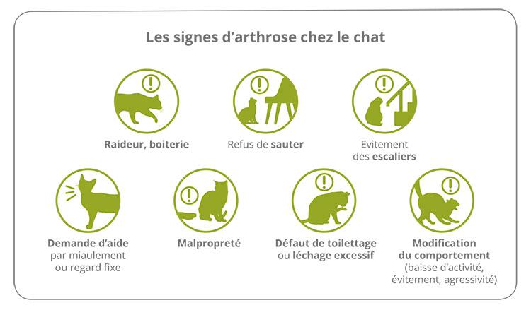 Les signes d'arthrose chez le chat 1
