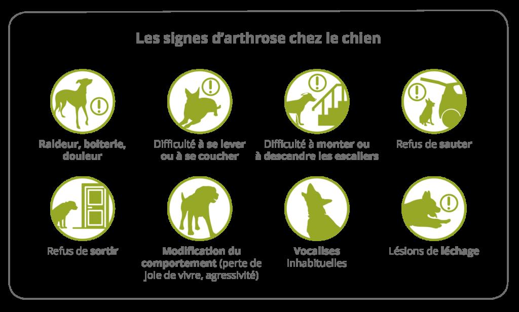 Les signes d'arthrose chez le chien 1