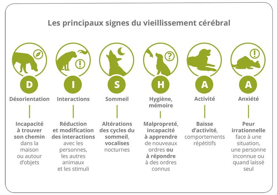 Les signes du vieillissement cérébral chez le chien et le chat 1