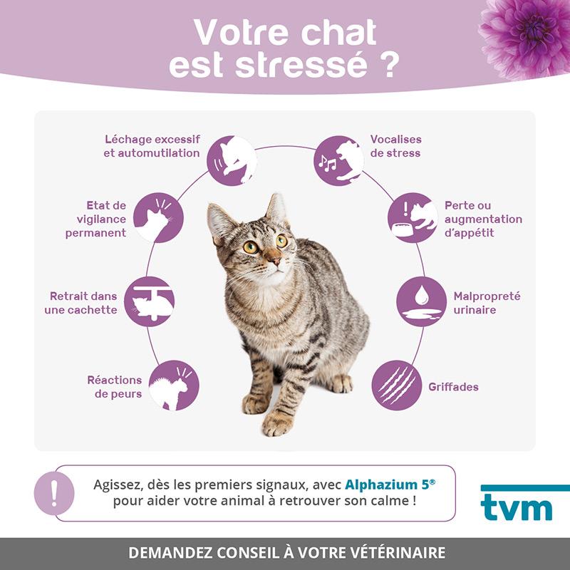 infographie chat stressé