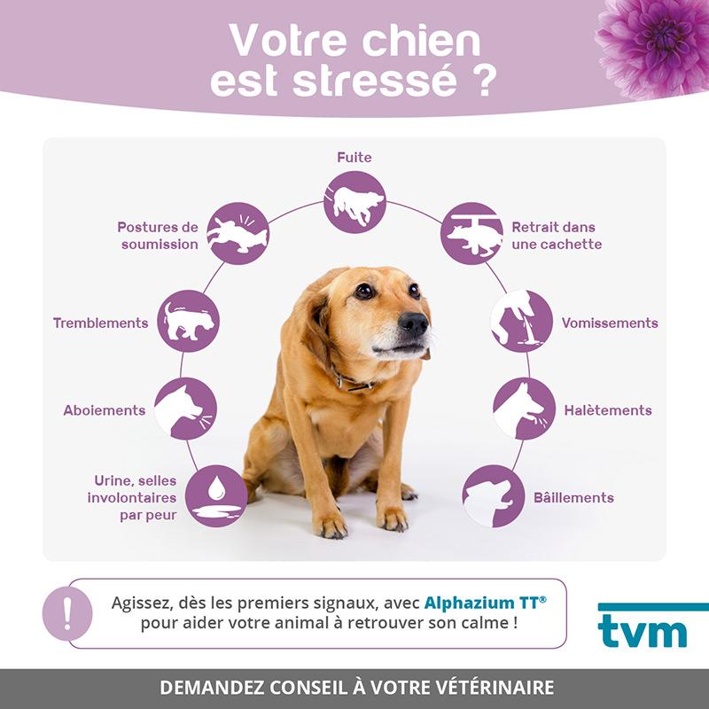 infographie chien stressé