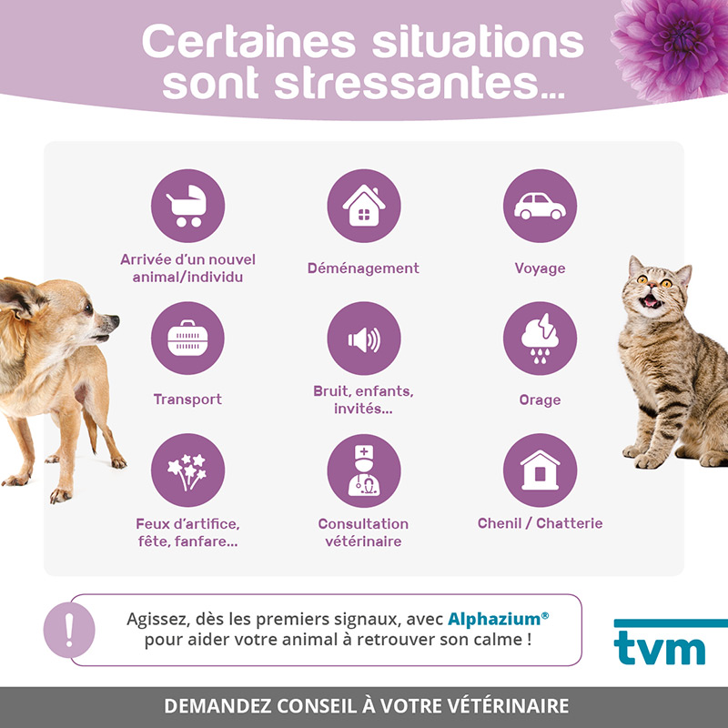 infographie situations stressantes chien chat